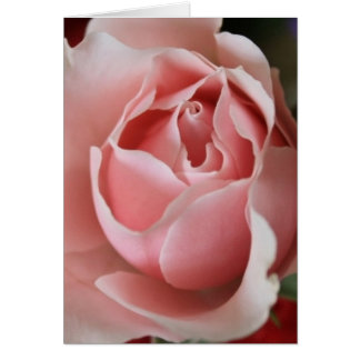Capullo de rosa rosado tarjetón