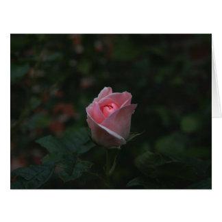 Capullo de rosa rosado felicitaciones