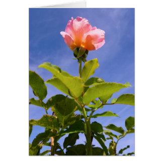 Capullo de rosa tarjetón