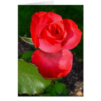 Capullo de rosa felicitacion