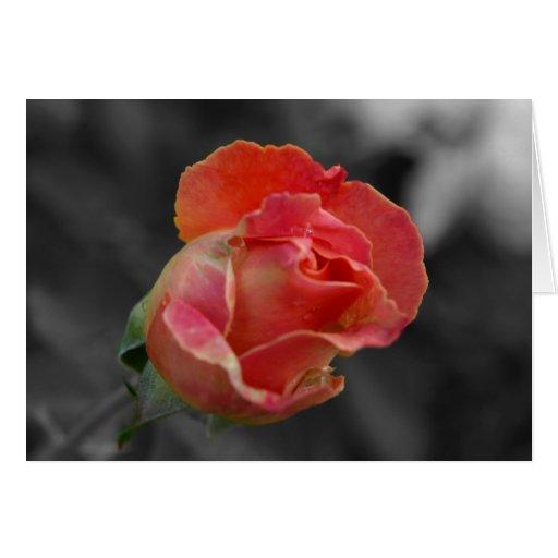 Capullo de rosa felicitaciones