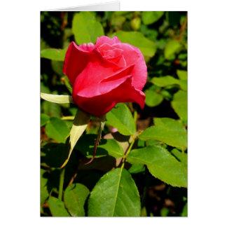 Capullo de rosa tarjeta