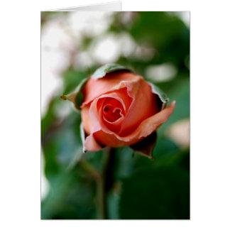 Capullo de rosa tarjeton