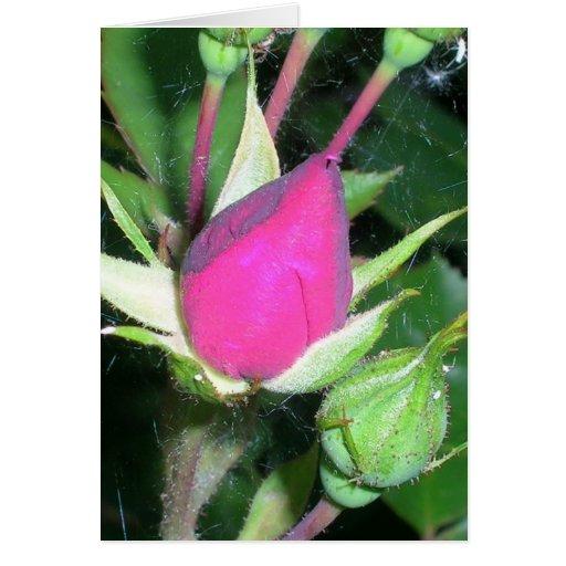 Capullos de rosa felicitación