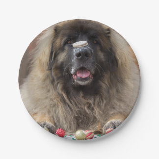 Cara de la galleta de Leonberger Plato De Papel