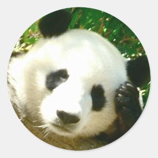 Cara de la panda pegatina redonda