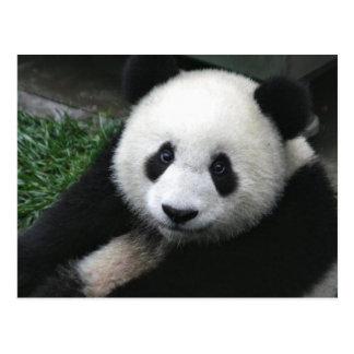 Cara de la panda postal
