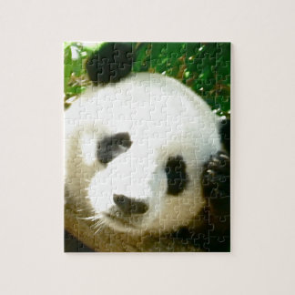 Cara de la panda puzzles con fotos