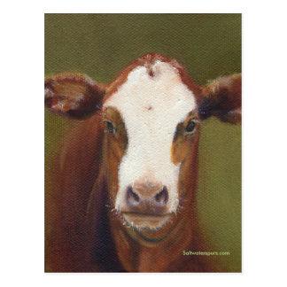 Cara de la vaca postal