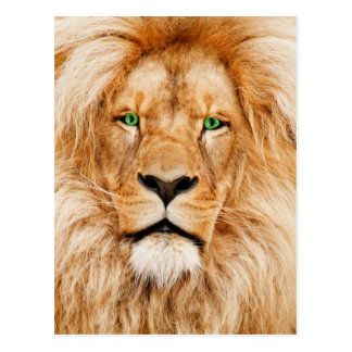 Cara de los leones de los ojos verdes postal