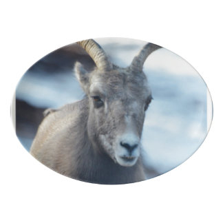 Cara de una oveja de Bighorn Bandeja De Porcelana