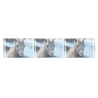 Cara de una oveja de Bighorn Camino De Mesa