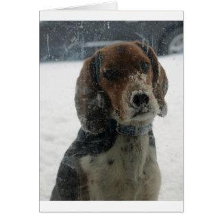 Cara del beagle en la ventana tarjeta de felicitación