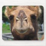 Cara del camello tapetes de ratón