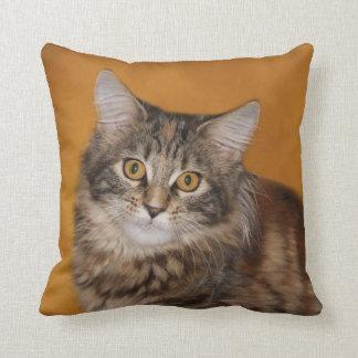 Cara del gatito del Coon de Maine Cojín Decorativo