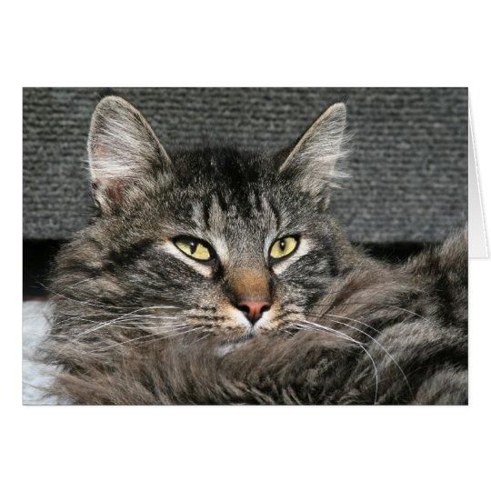 Cara del gato de Coon de Maine Tarjeta De Felicitación