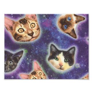 cara del gato - gato - gatos divertidos - espacio foto