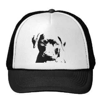 Cara del perrito de Pitbull Gorras