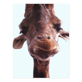 Cara divertida de la jirafa postal