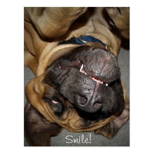 Cara feliz - postal inglesa divertida del perro de