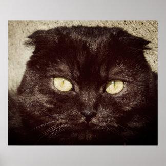 Cara joven del gatito de Munchkin Póster