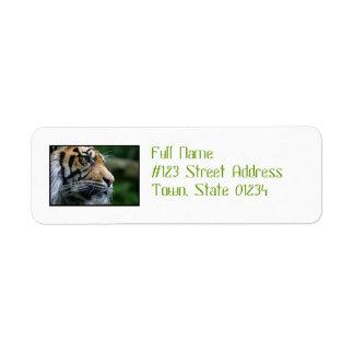 Cara magnífica del tigre de Bengala Etiqueta De Remitente