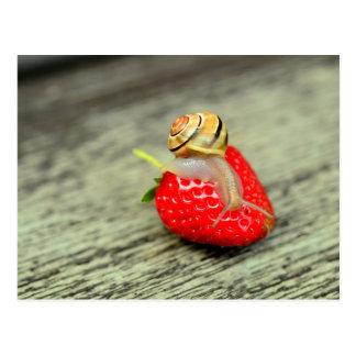Caracol en la fresa postal