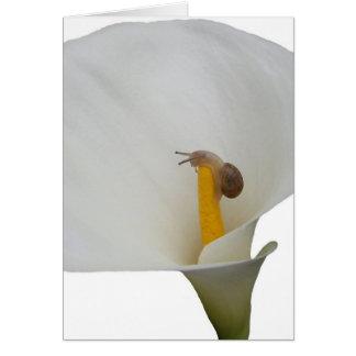 Caracol en tarjeta de felicitación chistosa del