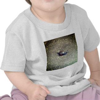Caracol pequeñito camisetas