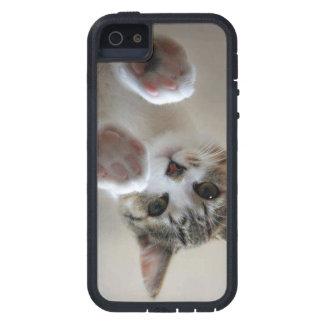 carcasa de gato iPhone 5 carcasa