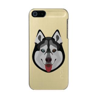 Carcasa De Iphone 5 Incipio Feather Shine El ilustracion persigue el husky siberiano de la