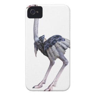 Carcasa Para iPhone 4 Avestruz