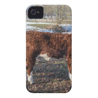 Carcasa Para iPhone 4 Becerros de Hereford en prado del invierno con