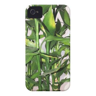 Carcasa Para iPhone 4 Brotes y hojas verdes de bambú