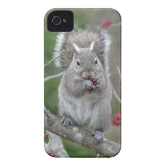Carcasa Para iPhone 4 Consumición de la ardilla