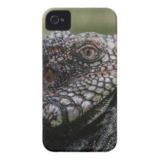 Carcasa Para iPhone 4 De Case-Mate 1920px-Iguanidae_head_from_Venezuela