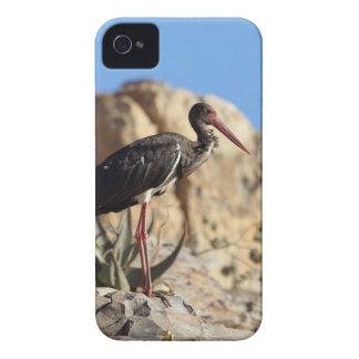 Carcasa Para iPhone 4 De Case-Mate Cigüeña negra (nigra del Ciconia) en una roca