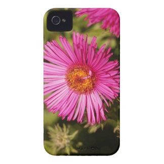 Carcasa Para iPhone 4 De Case-Mate Flor de un aster de Nueva Inglaterra