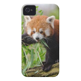 Carcasa Para iPhone 4 De Case-Mate Panda roja que come la hoja verde