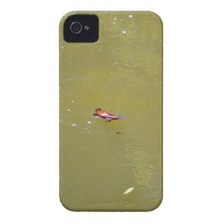 CARCASA PARA iPhone 4 DE Case-Mate PARQUE NACIONAL AUSTRALIA DE PLATYPUS EUNGELLA