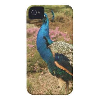 Carcasa Para iPhone 4 De Case-Mate Pavo real del verde azul y del naranja