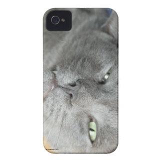 Carcasa Para iPhone 4 De Case-Mate ¡Relájese! Caja de ronroneo gris del iPhone 4 del