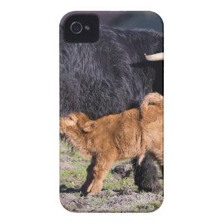 Carcasa Para iPhone 4 De Case-Mate Vaca y jóvenes escoceses negros de la madre del