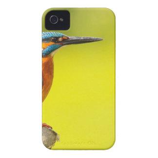 Carcasa Para iPhone 4 día birdy de los valantines del abucheo del pájaro