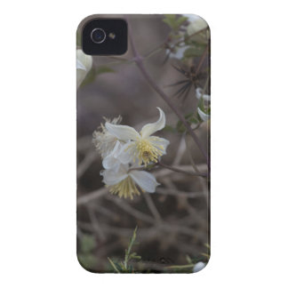 Carcasa Para iPhone 4 Flores de la alegría del viajero (brachiata del