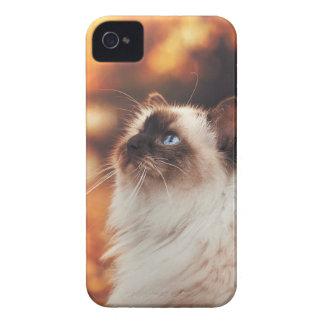 Carcasa Para iPhone 4 Gato