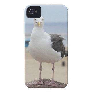 Carcasa Para iPhone 4 Gaviota