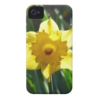 Carcasa Para iPhone 4 Narciso amarillo 03.0.g