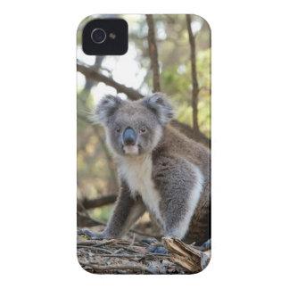 Carcasa Para iPhone 4 Oso de koala gris y blanco