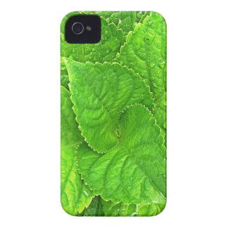 Carcasa Para iPhone 4 Para el amor de la naturaleza
